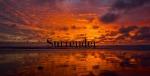 surrender11